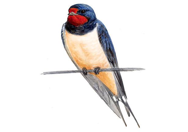 Nace… ANDORIÑA Agrupación ornitolóxica